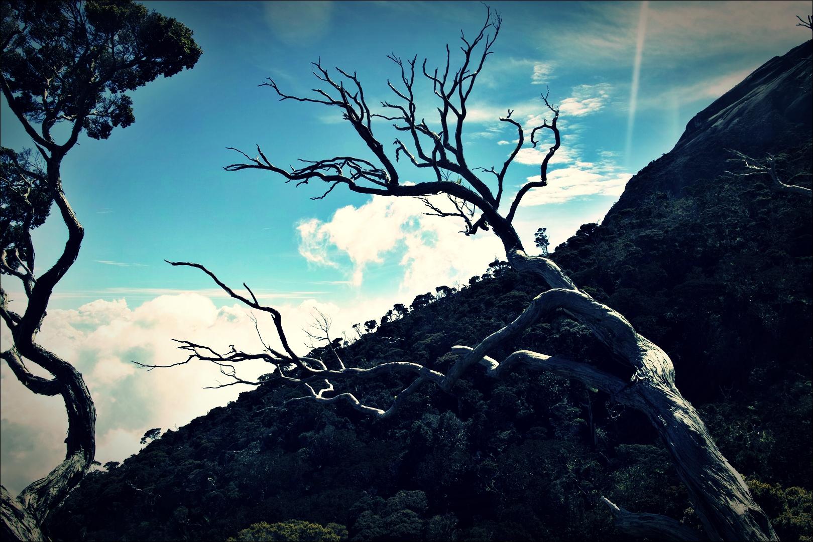 사슴뿔처럼 뻗은 나뭇가지-'키나발루 산 등정 Climbing mount Kinabalu Low's peak the summit'