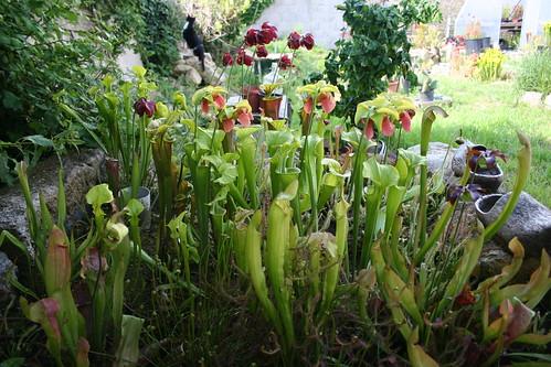plantes2014 083