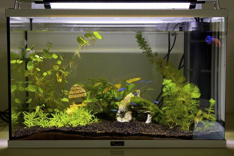 Lancement bac 55L (aquastart) - conseil pour les poissons 14735744466_847b56a0d8_c