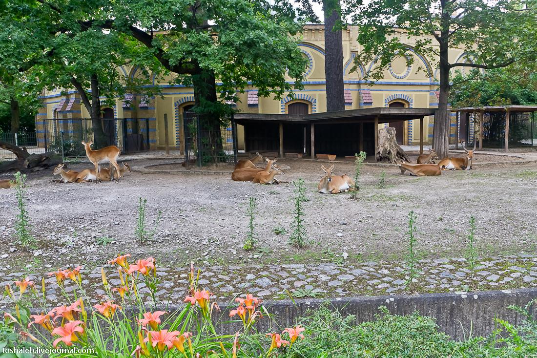 Берлин_зоопарк-50