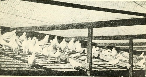 Image from page 184 of