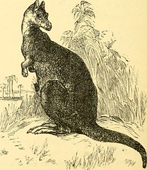 "Image from page 449 of ""The boy travellers in Australasia : adventures of two youths in a journey to the Sandwich, Marquesas, Society, Samoan and Feejee islands, and through the colonies of New Zealand, New South Wales, Queensland, Victoria, Tasmania, and"