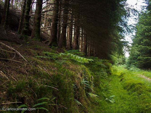 Bosque de Cruach Tarbeit - Loch Lommond