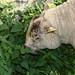 Small photo of Berta eats stinging nettles
