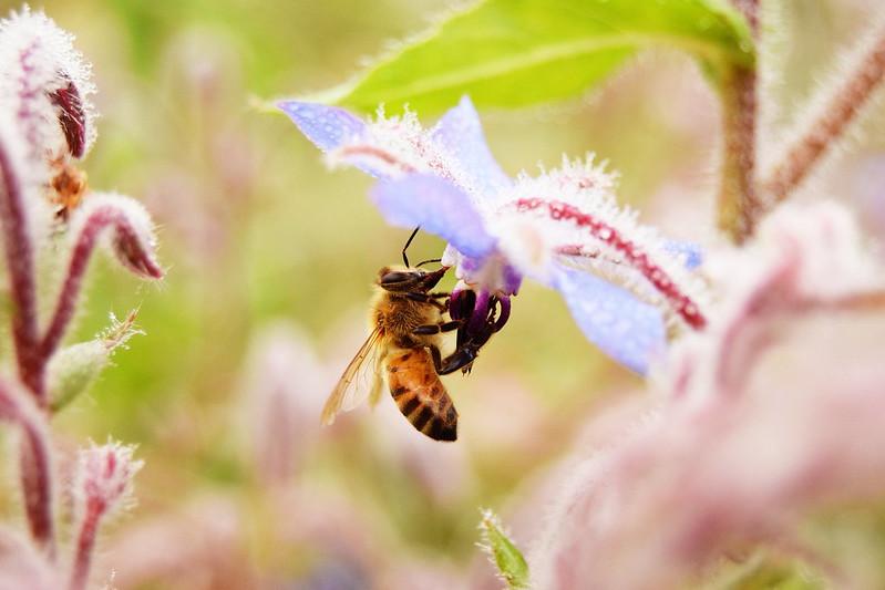 mehiläiset, sumuu, shopping 239