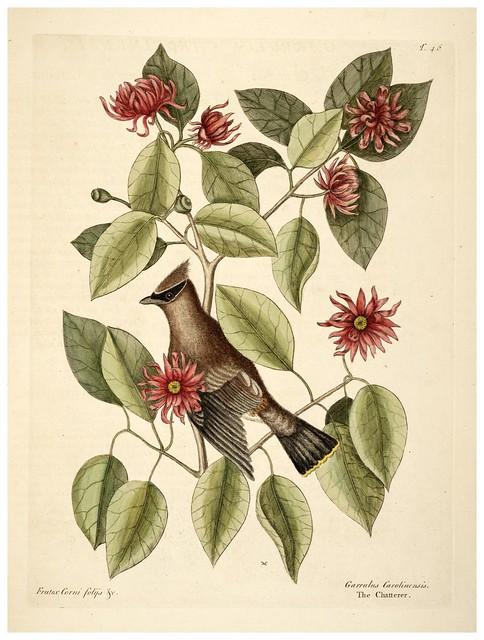 006- El Charlatan-Natural History of Carolina, Florida and the Bahama Islands-Vol1-1754