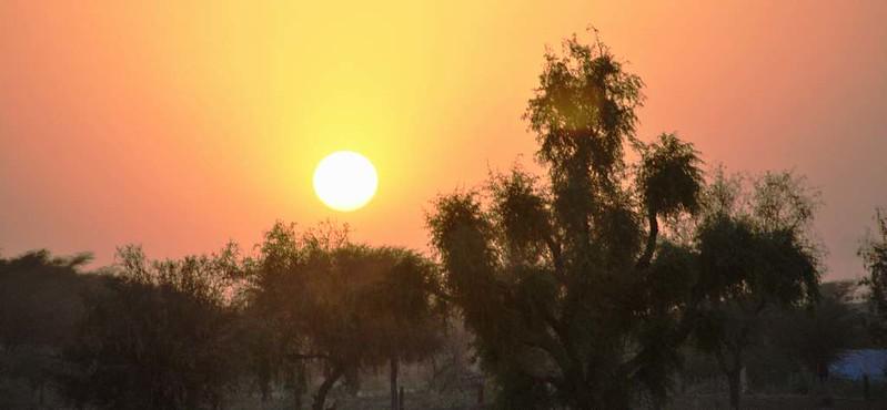 268 Camel safari a Jaisalmer (128)