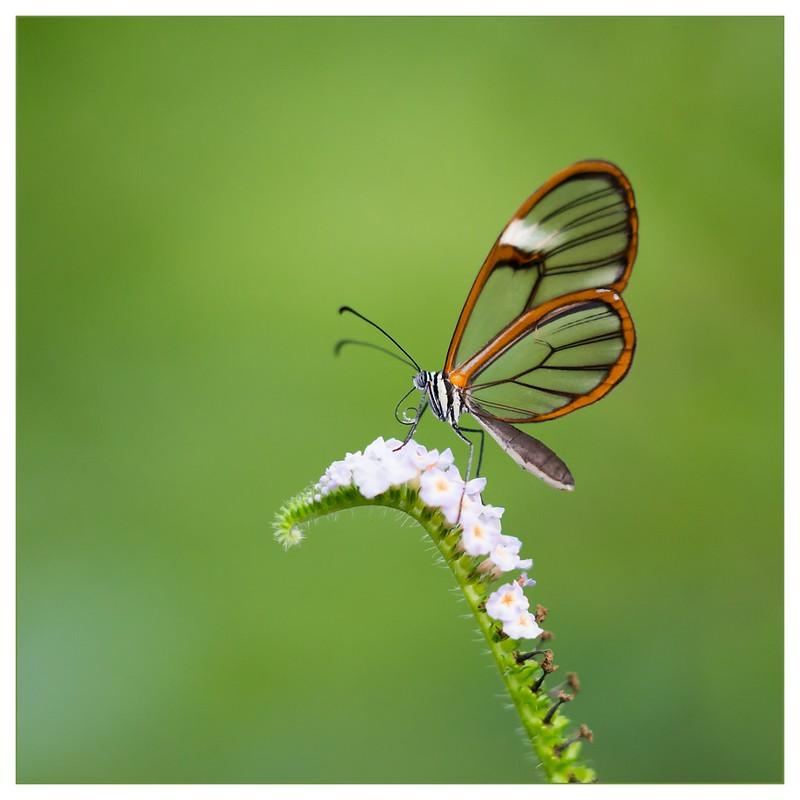DPC Winner - DPC #232 'Butterflies'