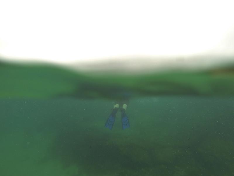 snorkelling galapagos islands