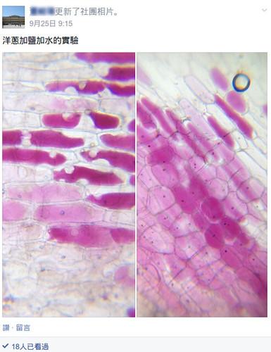紫洋蔥FB