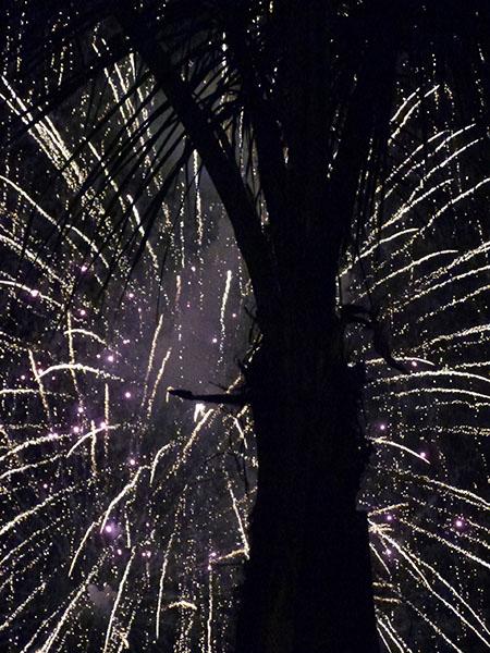 arbre et feu d'artifice