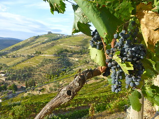 Uvas en terraza.