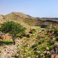 طبیعت زیبای چشمه ای اطراف کنگان.  روزهای آخر بهار!  تابستان برای آمدن عجله دارد. خورشید جنوب چهره تابان و برافروخته اش را هر روز نمایان تر می کند. اینجا همه ی سال تنها دو فصل دارد. نه ماه تابستان و سه ماه بهار. Beautiful nature near the Kangan.