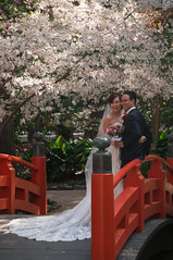 Wedding in the Japanese Garden at Descanso Gardens