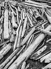 Driftwood Abstract, Oak Harbor, Washington, Spring 2017