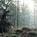Treebeast by GeraldGrote