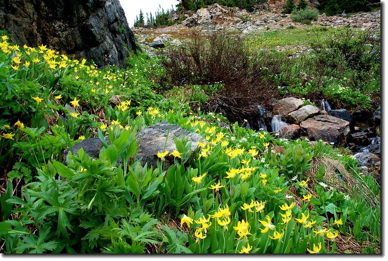Wildflowers and Waterfall 2