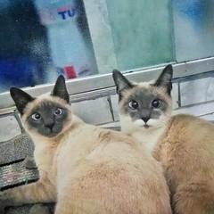 Os gatos da minha gata..