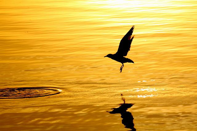 The Golden Lake...سنہری جھیل