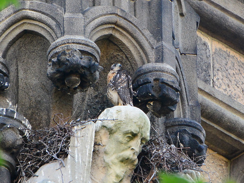 Cathedral Hawk Nest (1273)