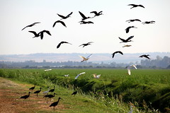 wetland(0.0), animal migration(1.0), prairie(1.0), plain(1.0), fauna(1.0), flock(1.0), bird migration(1.0), savanna(1.0), grassland(1.0), crane-like bird(1.0), crane(1.0), bird(1.0), wildlife(1.0),