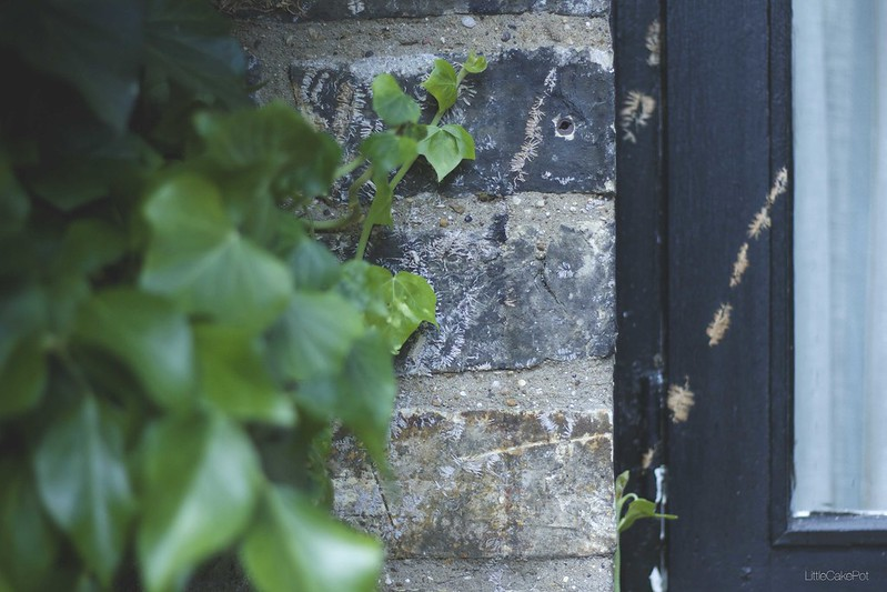 Ivy brick wall black door