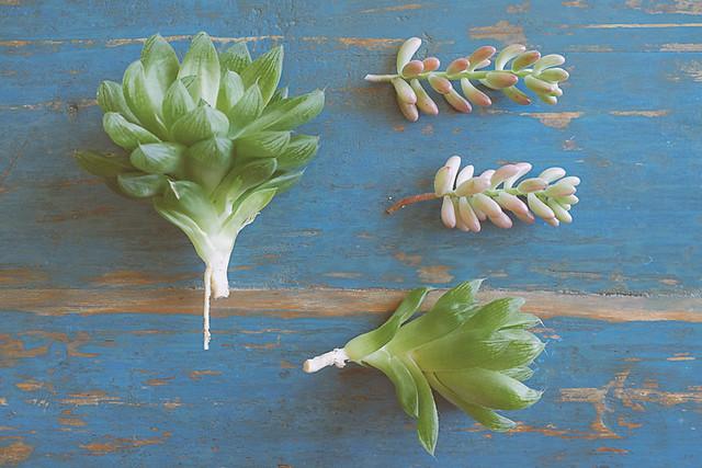bouturer des succulentes planb par morganours. Black Bedroom Furniture Sets. Home Design Ideas