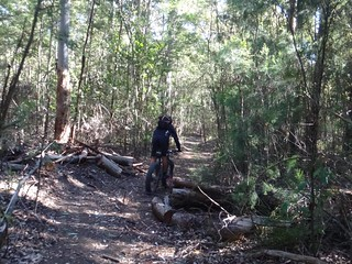 Stumpy Green Hut Track
