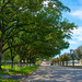 Nice trees in Humble, Texas