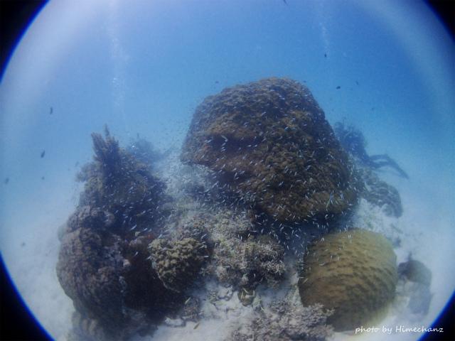 浜島東のキンメの根にはキンメもわっさ~だけど、スカシテンジクダイがもっとわっさ~♪