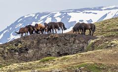 2014 06 14-15 Reykjavik-Akureyri-Husavik