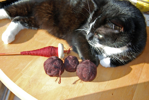 Melvin the cat with tulipwood Moosie and handspun Shetland wool yarn dyed by The Painted Tiger