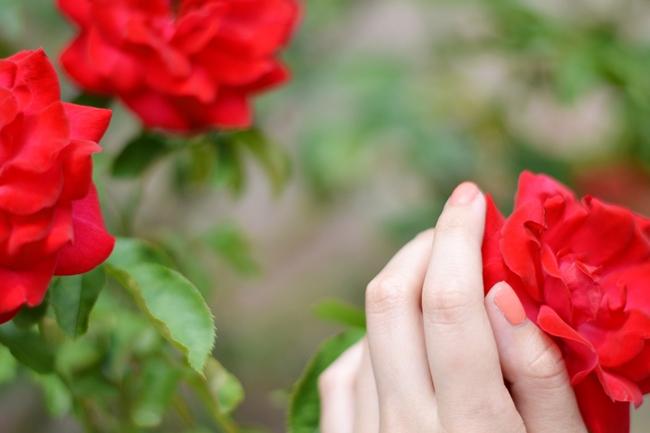 Like roses (8)