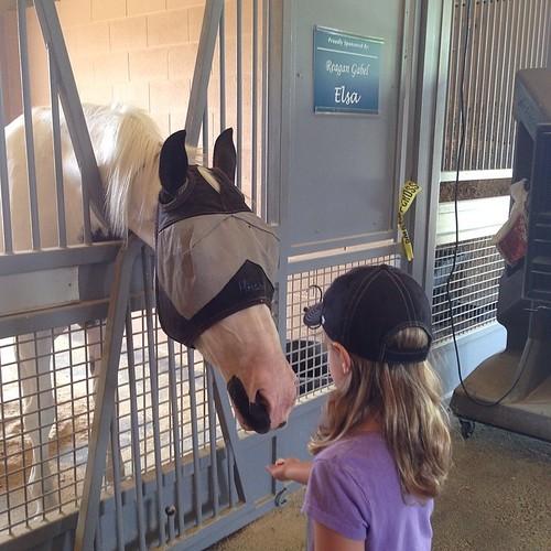 198:365 Feeding HPD's horses.