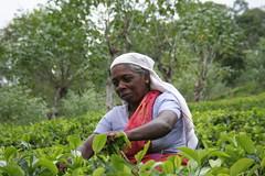 flower(0.0), agriculture(1.0), farm(1.0), field(1.0), plant(1.0), gardener(1.0), produce(1.0), farmworker(1.0), crop(1.0), rural area(1.0), plantation(1.0),