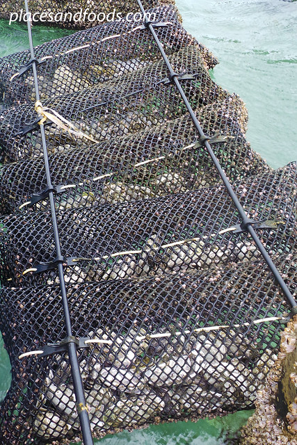 coffin bay oyster basket