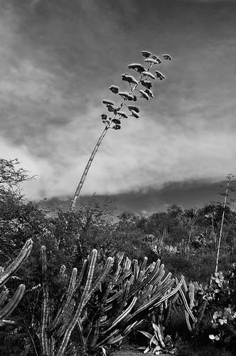 Chazumba Abril 2014 (25)