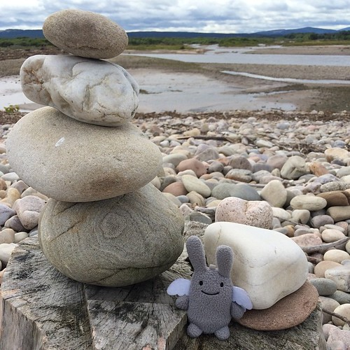 Angel Bunny at Spey Bay today.