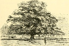 """Image from page 129 of """"Essex naturalist: being the journal of the Essex Field Club"""" (1887)"""