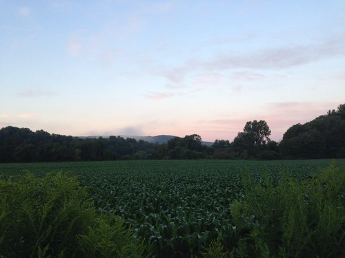 corn field at sunset along the Hoosick River, NY