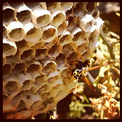 Wasps nest #amonthingreece