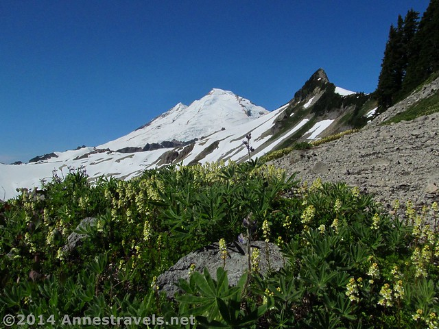 Flowers and Mount Baker