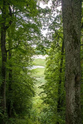 summer nature sony latvia vasara latvija gamta mariukasm sal16105 pažintiniaitakai vietovės cognitivepaths pilskalnessiguldina