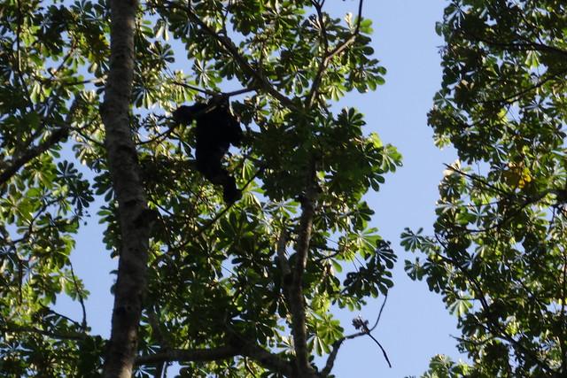 140624 Chimpanzee Hike (10)