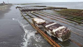 台南沙灘上的白色廢棄物,其實是養蚵業者用來搭蚵架的保麗龍。圖片來源:綠粉絲