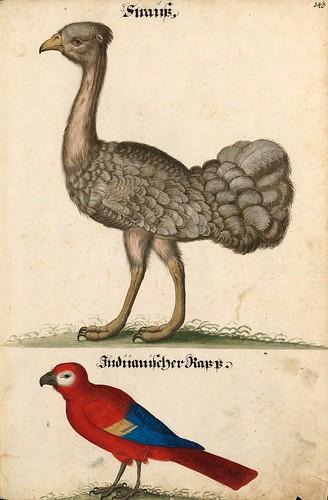 011-Aquarelle von Säugetieren…- e-manuscripta-Bibliothèque électronique suisse