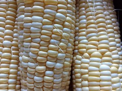 honeycomb(0.0), dish(0.0), design(0.0), sweet corn(1.0), corn kernels(1.0), yellow(1.0), maize(1.0), corn on the cob(1.0), produce(1.0), food(1.0), crop(1.0), cuisine(1.0),