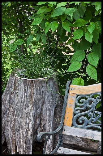 Kinky grass by bench