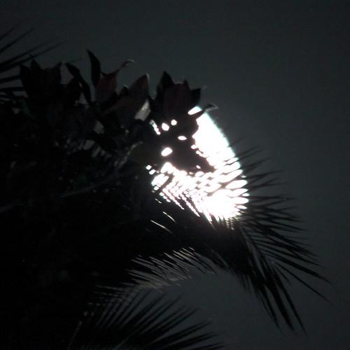 senza titolo (installazione: palm, magnolia, natural night light)