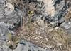 Mackinac Island flora